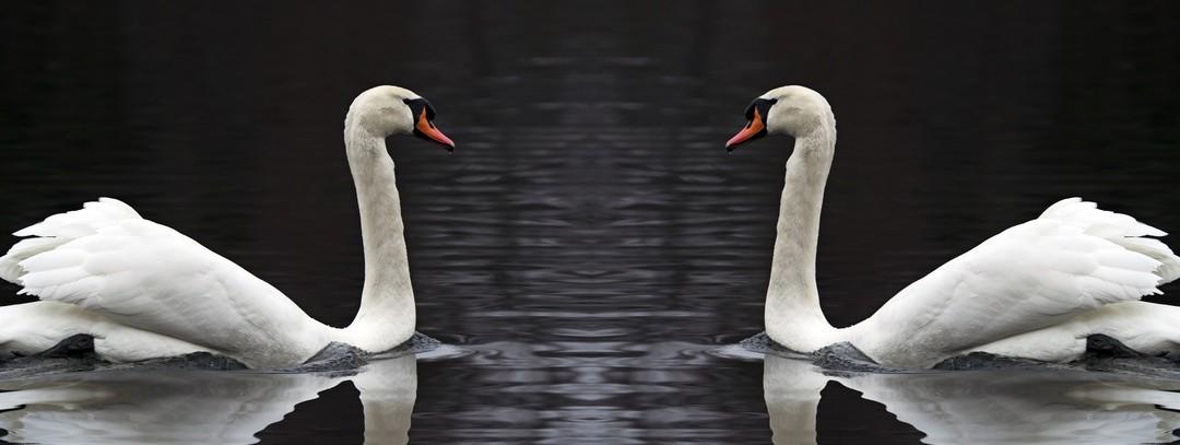Miroir, gentil miroir… ou la relation entre le dirigeant et son conseiller