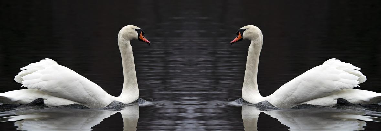 Miroir gentil miroir ou la relation entre le dirigeant for Miroir miroir dis moi que je suis la plus belle