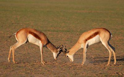 Traverser de fructueux conflits