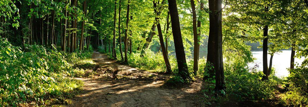 En quoi est-il utile pour un dirigeant ou une équipe de se promener en forêt?