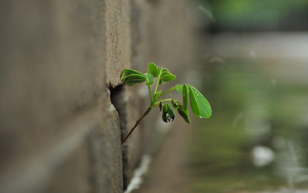 Plante qui pousse à travers un mur